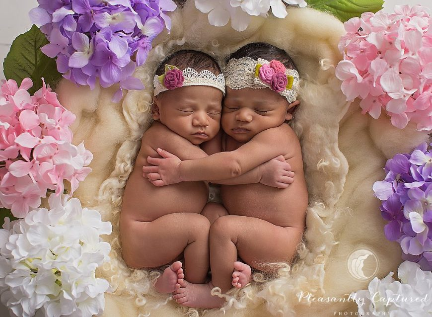 P i n newborn twin girls in bowl of flowers holding each other pleasantly captured photography eastern